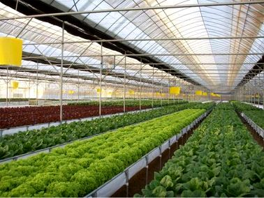 feasibility study on herbs farming A prepared feasibility study for catfish farm in nigeria how to get loan for fish farming business in nigeria feasibility study on local fish farming.